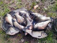 春のふな釣り大会