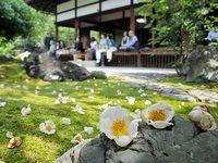 東林院「沙羅の花を愛でる会」