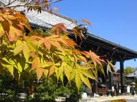 京都紅葉清涼寺20091015