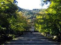 京都紅葉二尊院2009