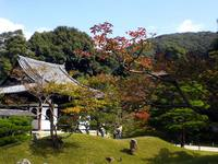 京都紅葉情報高台寺20091019
