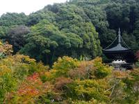 京都紅葉永観堂20091022