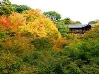 京都紅葉東福寺20091022
