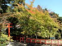 京都紅葉上賀茂神社