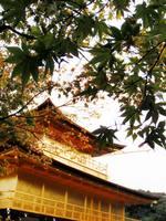 京都紅葉金閣寺20091026