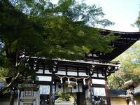京都紅葉松尾大社20091028