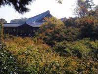 京都紅葉東福寺20091028