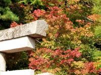 京都紅葉大原野神社20091029