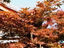 京都紅葉正法寺20091030