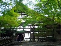 京都紅葉龍安寺20091105