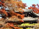 京都紅葉善峯寺20091110