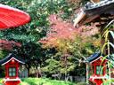 京都紅葉十輪寺20091110