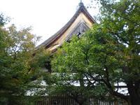 京都紅葉黄梅院20091110