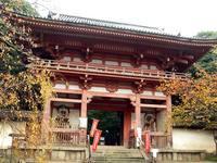 京都紅葉醍醐寺20091111