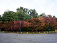 京都紅葉京都御苑20091111