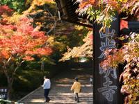 京都紅葉光明寺20091113