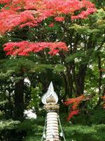 京都紅葉山崎聖天20091113