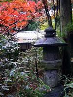 京都紅葉来迎院20091116