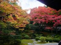 京都紅葉泉涌寺20091116