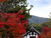 京都紅葉天龍寺20091116