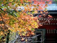 京都紅葉鞍馬寺20091118
