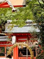 京都紅葉宇治神社20091118