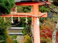 京都紅葉宇治上神社20091118