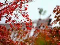 京都紅葉平等院20091119