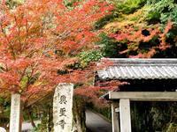 京都紅葉興聖寺20091119