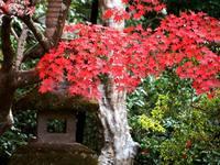 京都紅葉泉涌寺20091124