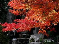 京都紅葉泉涌寺塔頭20091124