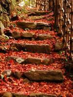 京都紅葉高山寺20091124