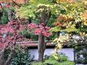 京都紅葉東福寺20091124