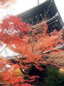 京都紅葉真如堂20091124