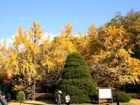 京と紅葉府立植物園20091126