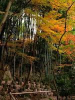 京都紅葉石峯寺20091130