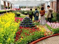 府立植物園「花の回廊~早春の草花展」