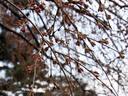 京都御苑20100311