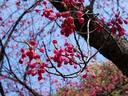 平安神宮20100311