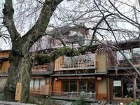 京都桜2010祇園白川