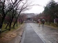 京都桜2010仁和寺