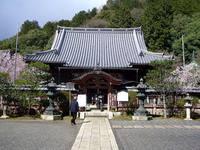京都桜2010毘沙門堂