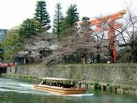 京都桜2010十石舟