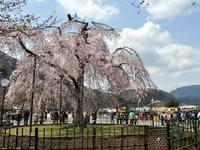 京都桜2010嵐山
