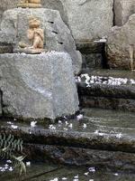 京都桜2010六角堂