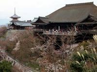 京都桜2010清水寺