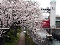 京都桜2010伏見港