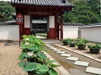 萬福寺のハス