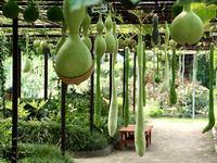 京都府立植物園ひょうたん