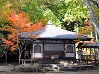 京都高山寺の紅葉